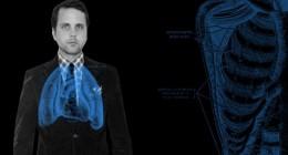 dandy anatomy