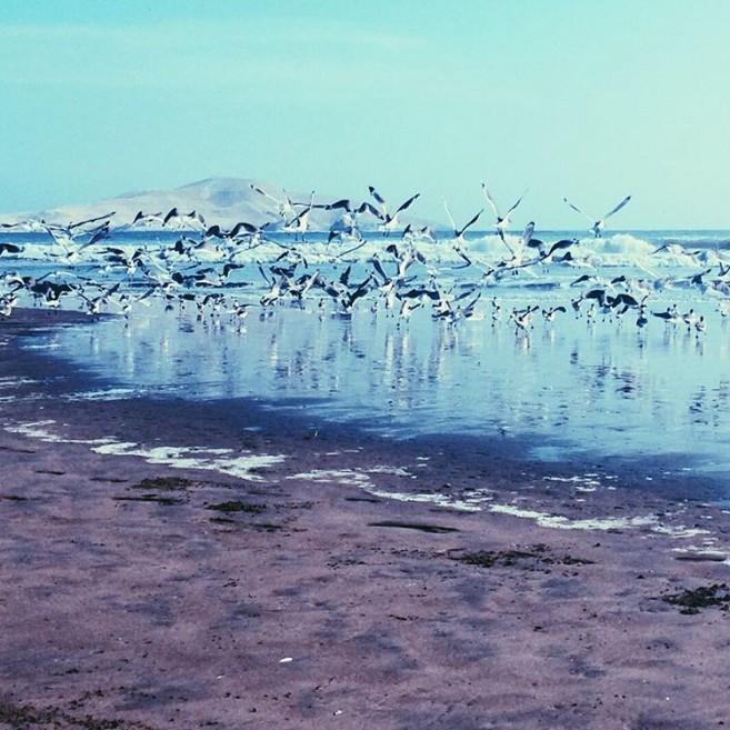 Pérou plage